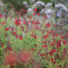 Five Waterwise Flowers You Can't Kill