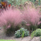 Gorgeous Grasses Make Emotional Accents