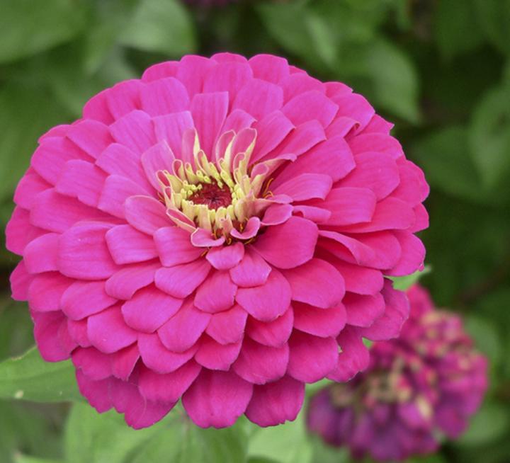 Heat-Loving Flowers of Summer