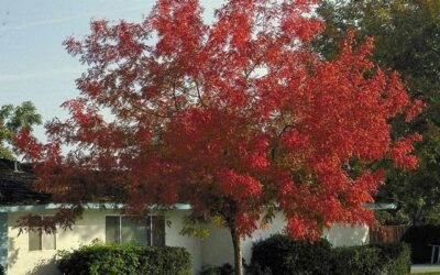 The Best Autumn-Colored Tree