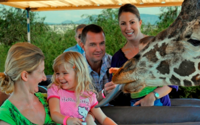 """Out of Africa"" comes to life at Camp Verde wildlife park"