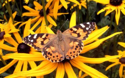 The Plants You Need for Irresistible Butterfly Gardens