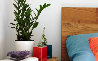 Top 10 Houseplants for a Healthy Indoors