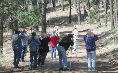 Verde Valley Birding and Nature Festival features in-person and virtual tours this year