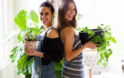 Grow Plants Indoors—Without Killing a Single One!